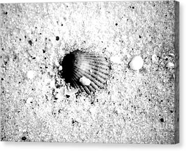 Ribbed Sea Shell Macro Buried In Fine Wet Sand Black And White Digital Art Canvas Print by Shawn O'Brien
