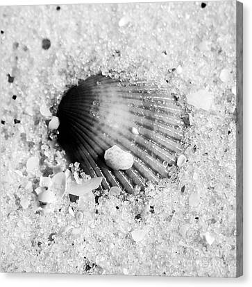 Ribbed Sea Shell Macro Buried In Fine Wet Sand Square Format Black And White Canvas Print by Shawn O'Brien
