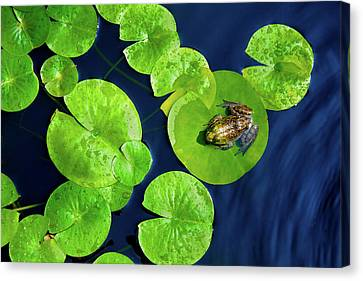 Ribbit Canvas Print by Greg Fortier