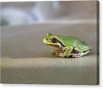 Canvas Print featuring the photograph Little Green Frog by Micki Findlay