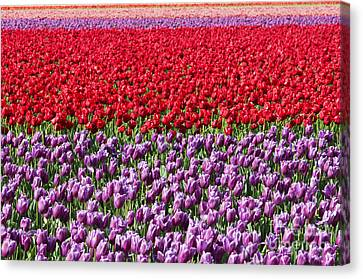 Ribbons Of Color Canvas Print by Mike Dawson