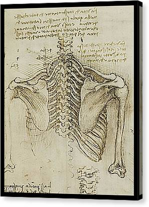 Canvas Print featuring the painting Ribcage Main by James Christopher Hill