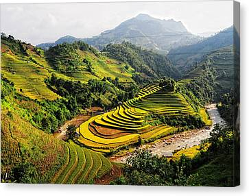 Rice Fields On Terraced In Vietnam Canvas Print by Phuong Duy Nguyen