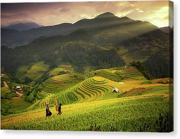 Rice Fields On Terraced Of Mu Cang Chai Canvas Print