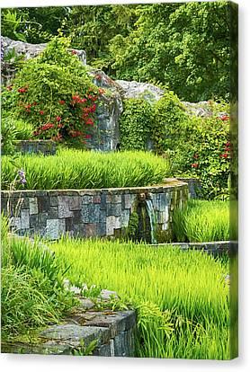 Rice Garden Canvas Print by Wim Lanclus