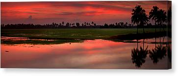 Rice Paddies At Sunset Canvas Print