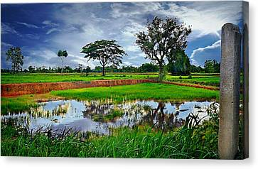 Rice Paddy View Canvas Print