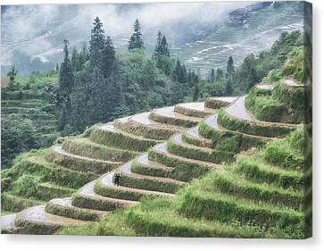 Canvas Print featuring the photograph Rice Terraces by Wade Aiken