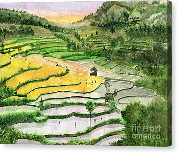 Ricefield Terrace II Canvas Print by Melly Terpening
