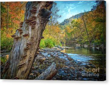 Richland Creek Canvas Print by Larry McMahon