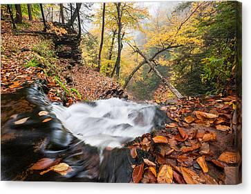 Ricketts Glen State Park Ganoga Falls Allegheny Mountains Pennsylvania Canvas Print by Mark VanDyke