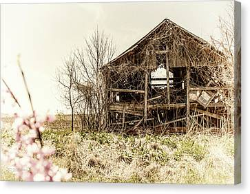 Rickety Shack Canvas Print by Pamela Williams