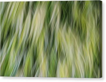 Ride The Wind Canvas Print by Rachel Cohen