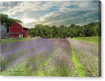 Ridge Farm Lavender Canvas Print