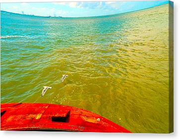Canvas Print featuring the photograph Riding The Wind - A Birds View by Max Mullins