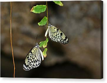 Canvas Print featuring the photograph Right And Left Wings by Teresa Blanton