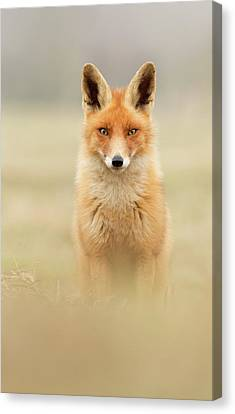 Right Into Your Soul - Red Fox Canvas Print by Roeselien Raimond