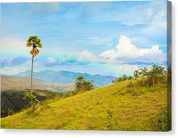 Rinca Island. Canvas Print by MotHaiBaPhoto Prints