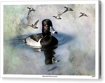 Ring-necked Duck Comrades Canvas Print