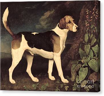 Ringwood Canvas Print by George Stubbs