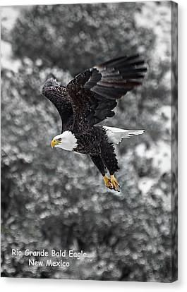 Canvas Print featuring the photograph Rio Grande Bald Eagle by Britt Runyon