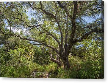 Canvas Print featuring the photograph Riparian Jungle by Alexander Kunz