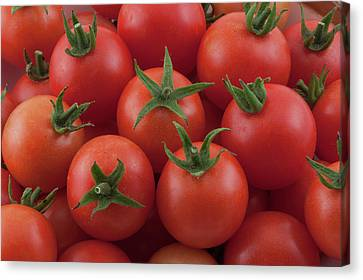 Canvas Print featuring the photograph Ripe Garden Cherry Tomatoes by James BO Insogna