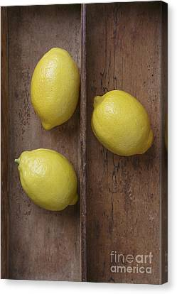 Wooden Box Canvas Print - Ripe Lemons In Wooden Tray by Edward Fielding