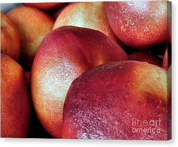 Ripe Peaches Canvas Print