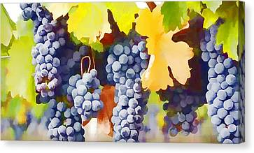 Ripe Wine Grapes Ready For Harvest Canvas Print by Lanjee Chee