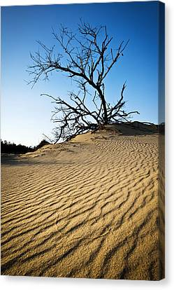 Rippled Sand Dunes Outer Banks Nc - Weathered Canvas Print by Dave Allen