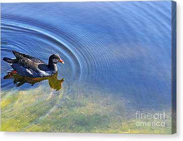 Ripples And Seaweed Canvas Print by Kaye Menner