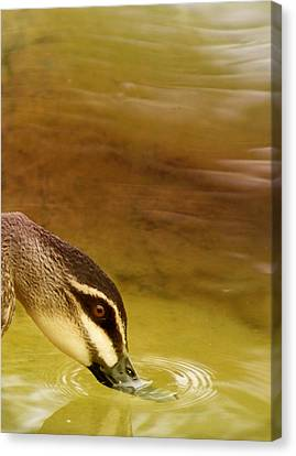 Ripples Canvas Print by Holly Kempe
