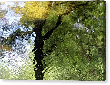 Ripples In Green Canvas Print by Carolyn Stagger Cokley