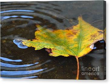 Rippling Canvas Print by Dan Holm