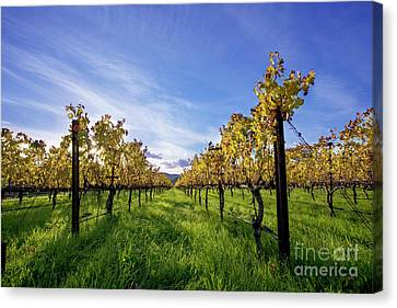 Rise And Shine Canvas Print by Jon Neidert
