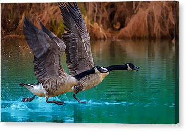 Rise Of Flight Canvas Print by Brian Stevens