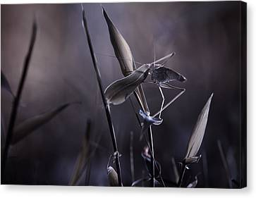 Grasshopper Canvas Print - Rise Of The Guardian by Fabien Bravin
