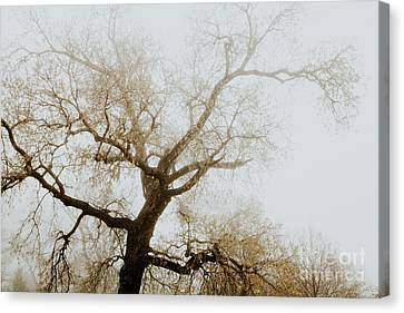 Canvas Print featuring the photograph Rising by Iris Greenwell