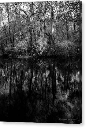 River Bank Palmetto Canvas Print by Marvin Spates