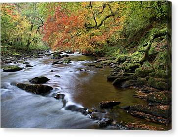 River Barle In Somerset Canvas Print