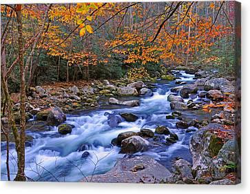 River Birch Overhangs Big Creek Canvas Print by Alan Lenk