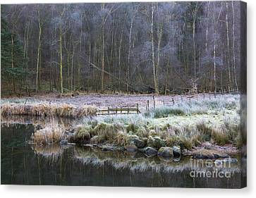 River Brathay Reflections And Silver Birch Canvas Print