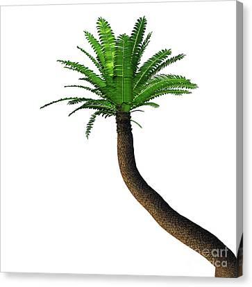 River Cycad Encephalartos Altensteinii Tree Canvas Print