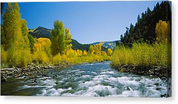 River Flowing In The Forest, San Miguel Canvas Print by Panoramic Images