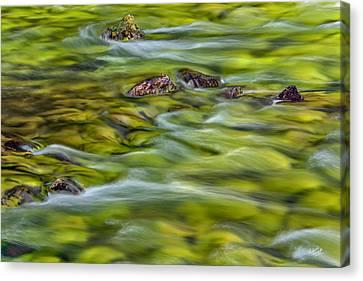 River Moss Canvas Print by Leland D Howard