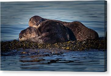 River Otters Canvas Print by Randy Hall