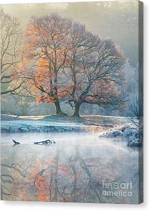 River Reflections - Winter Canvas Print by Tony Higginson
