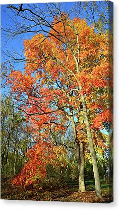 Canvas Print featuring the photograph River Road Maples by Ray Mathis
