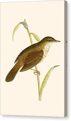 River Warbler Canvas Print by English School